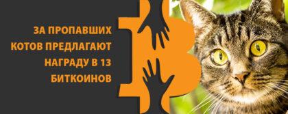 биткоин коты вознаграждение